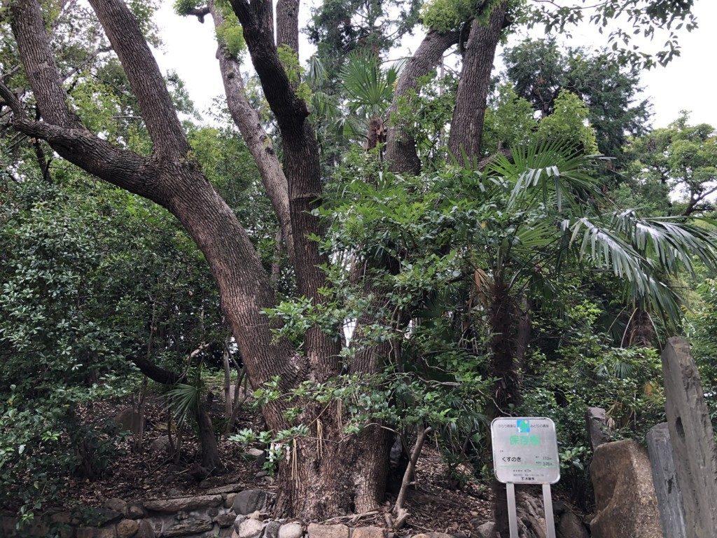 安居神社の木