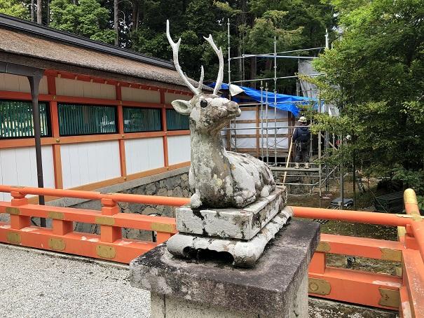 狛犬ではなく狛鹿が社殿前にあるのは全国唯一大原野神社だけ!
