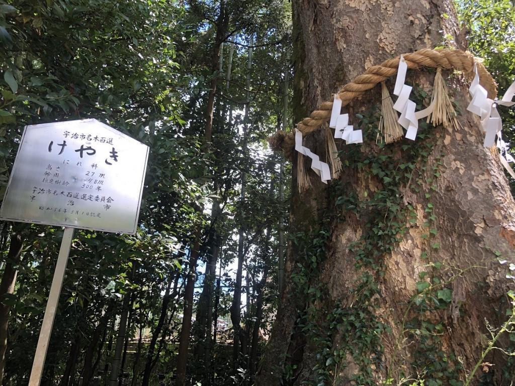 宇治上神社ご神木