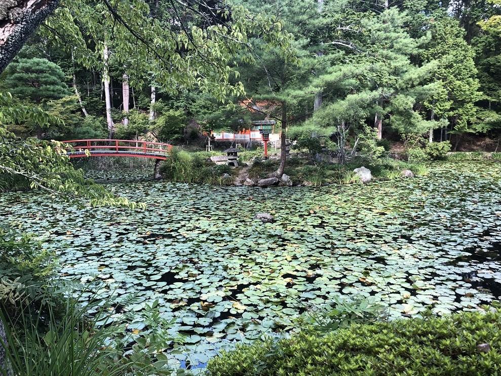 大原野神社鯉沢池