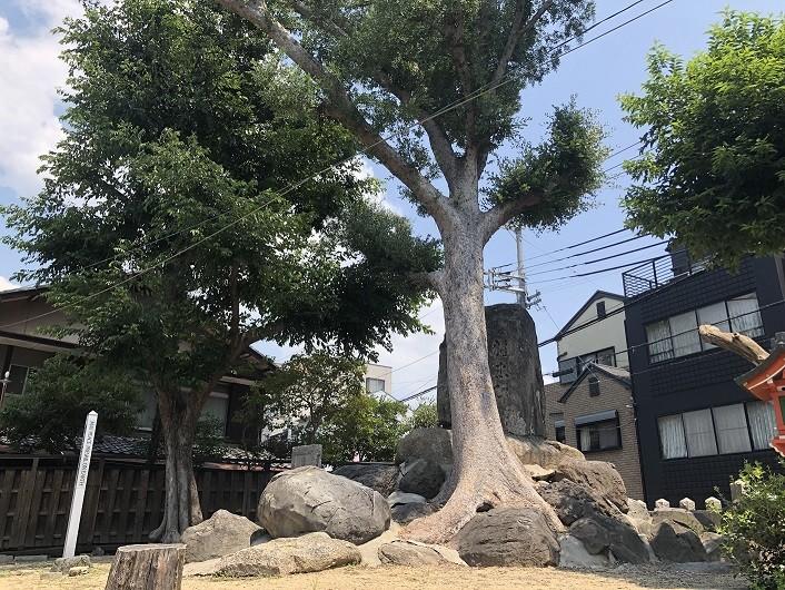 野里住吉神社 木々