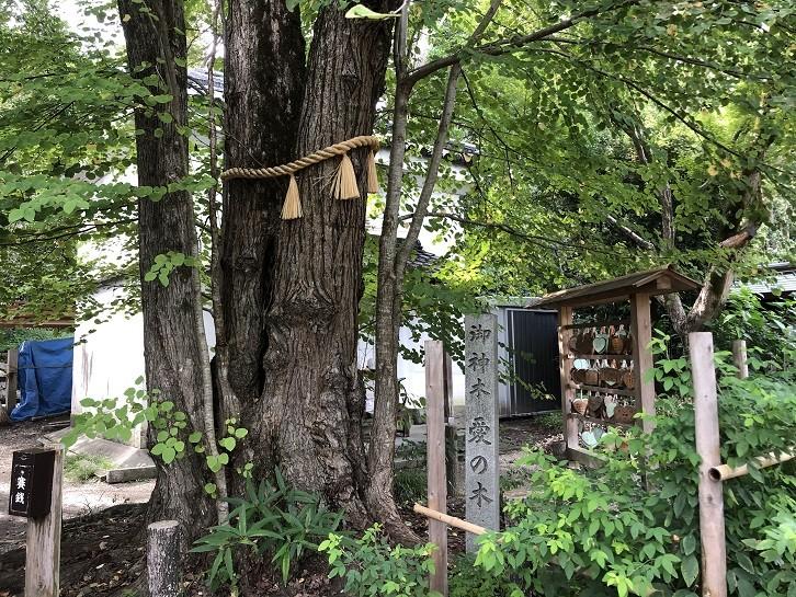 梨木神社 御神木愛の木