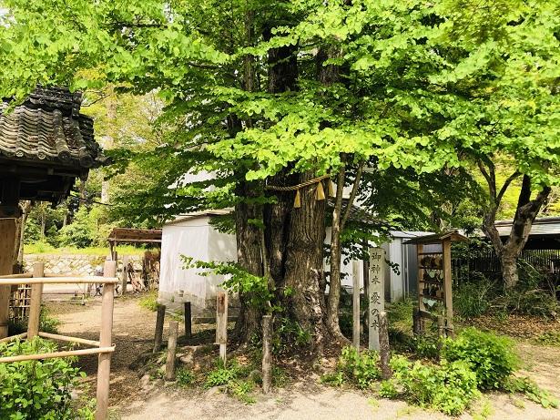 恋愛成就のパワースポットご神木「愛の木」梨木神社