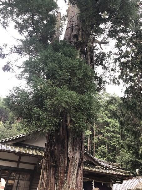 愛宕神社 名木