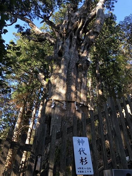 玉置神社 規格外!樹齢3000年の神代杉