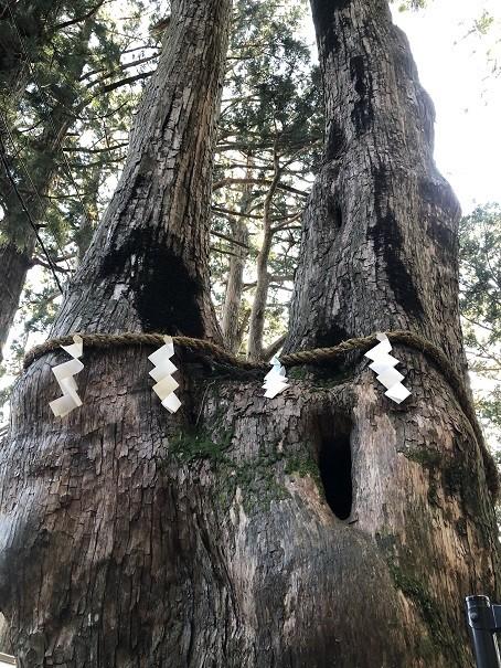 玉置神社 夫婦杉