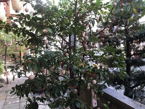 願いが叶う「大願梅」の樹