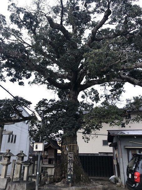 櫟谷七野神社 御神木
