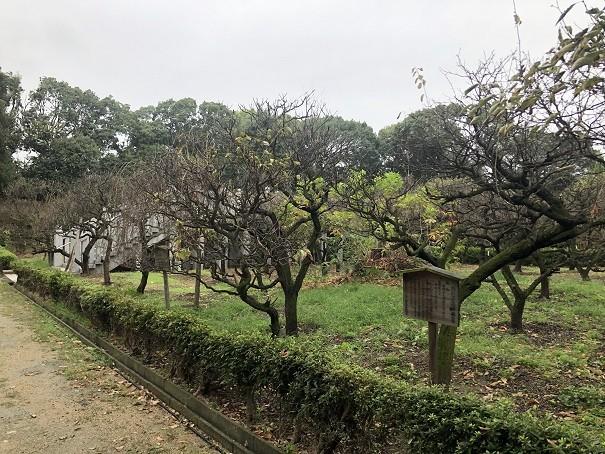 道明寺天満宮 梅園