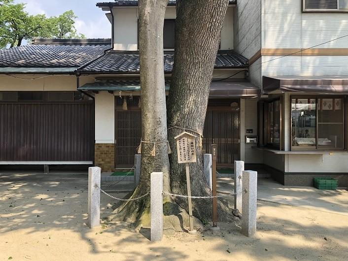 椋橋総社 縁結びの木