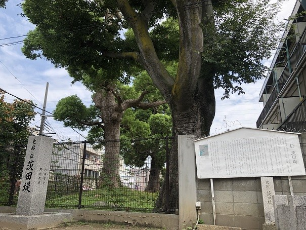 堤根神社 クスノキ