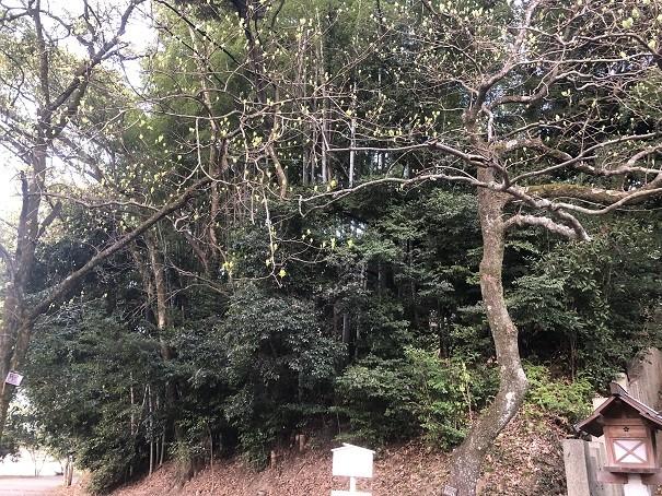 東雲神社 ナンジャモンジャの木