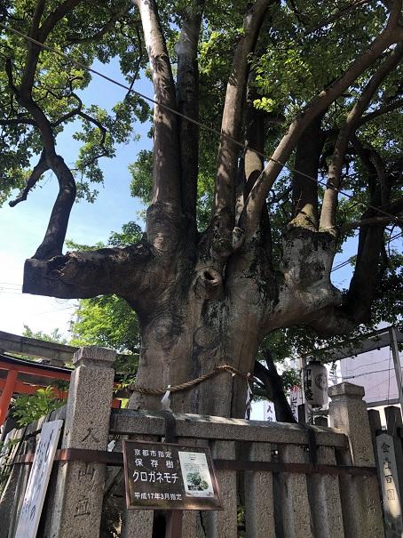 悪いところが治る霊石「岩神さん」&末広がりのご神木