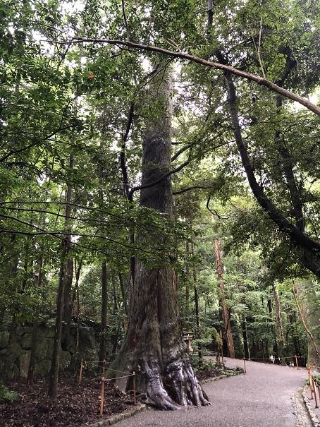 樹齢1000年のパワーツリー