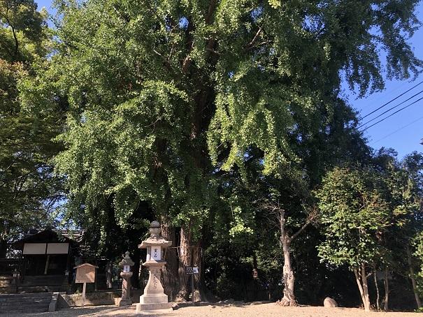 秋になるといちょうが咲く紅葉スポット三栖神社