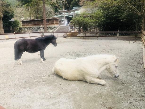 白と黒の神馬(しんめ)が飼育されている「絵馬発祥の地」