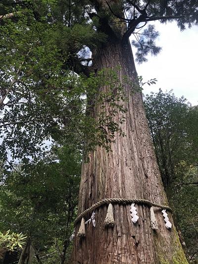 丹生川上神社中社 樹齢1000年の叶えの大杉・樹齢800年の夫婦杉