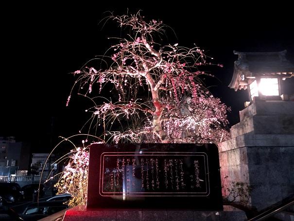 綱敷天満宮梅の季節に開催される梅の花のライトアップ