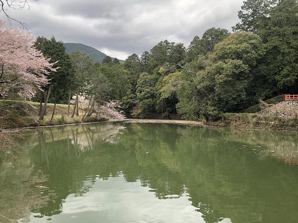 高鴨神社池